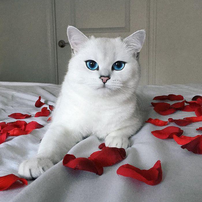 выбор_котенка