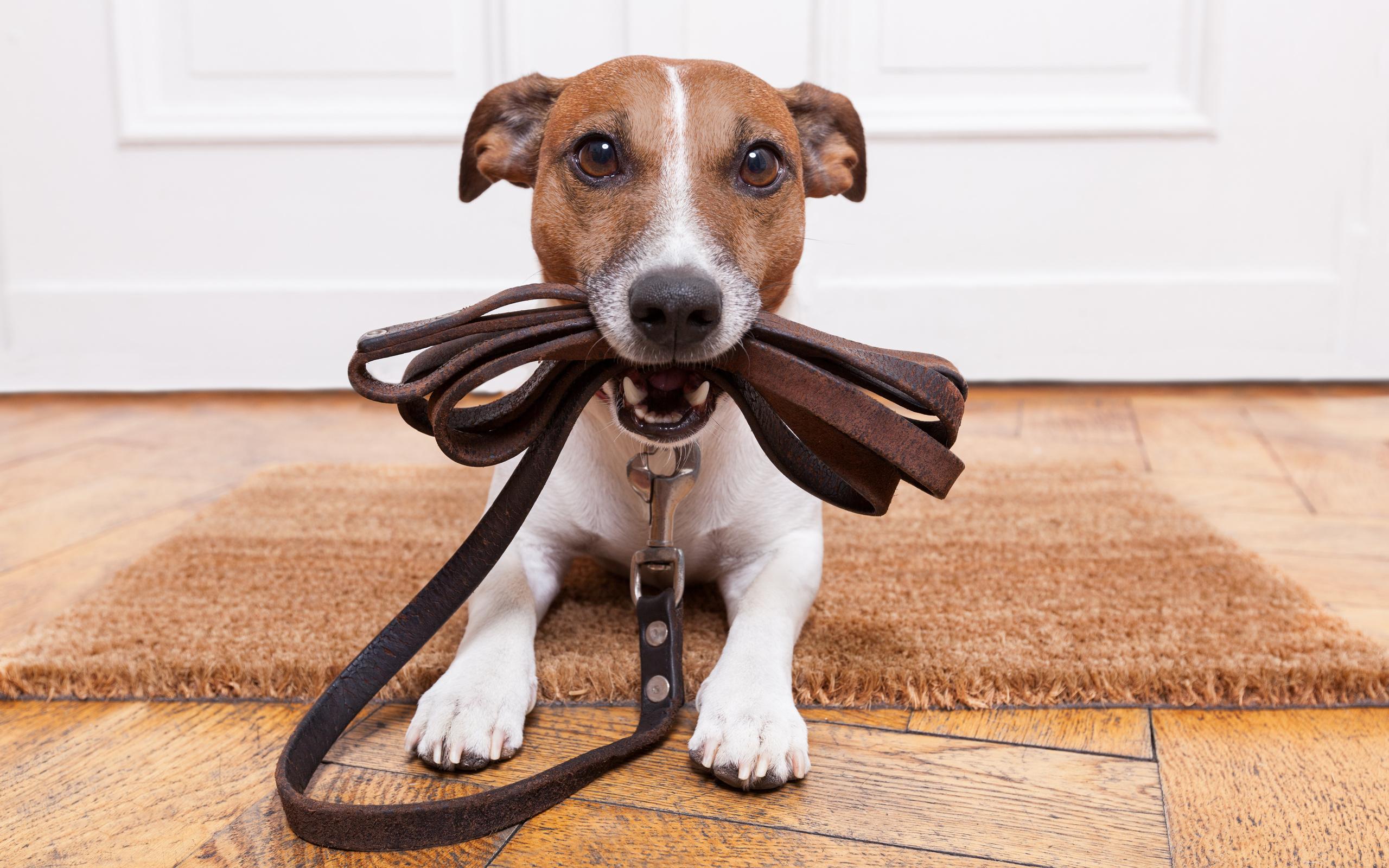 если_собака_справляет_нужду_дома