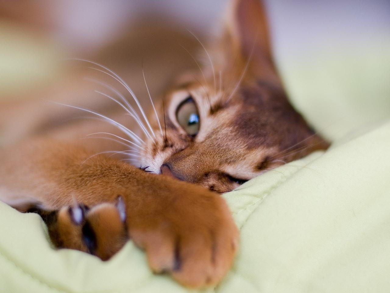 кошка_вредные_привычки