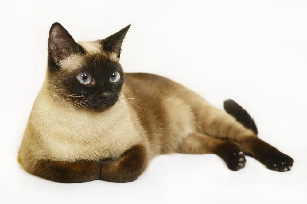 агрессия_кошки